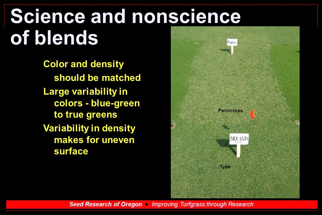Seed Research of Oregon Improving Turfgrass through Research Science and nonscience of blends Color and density should be matched Large variability in