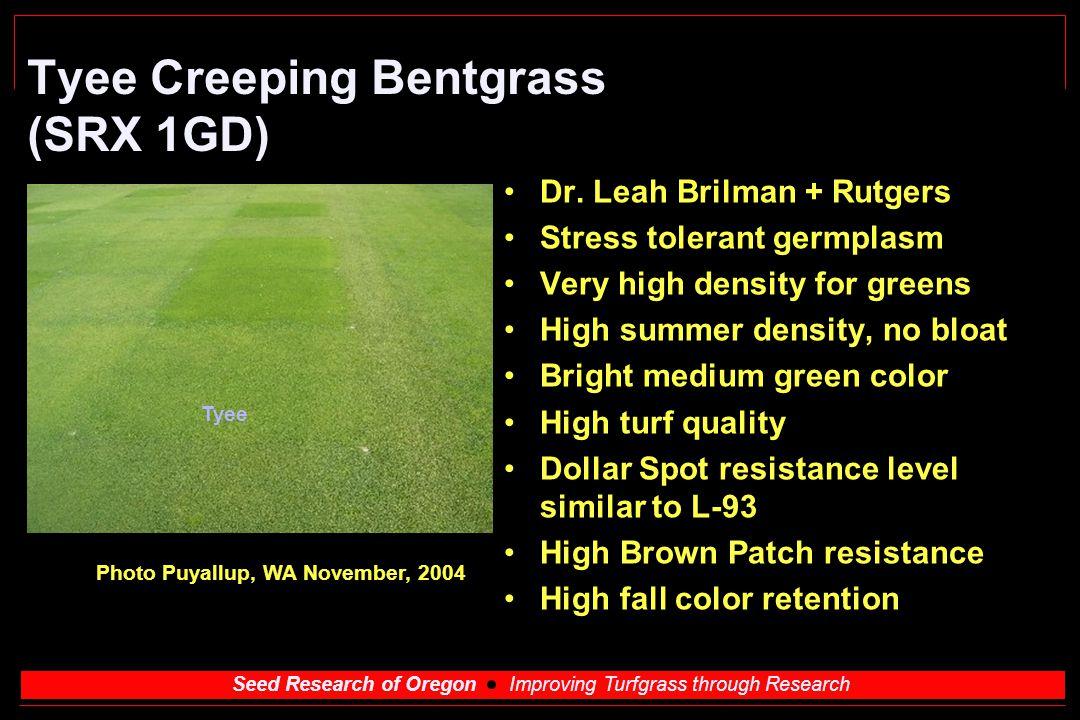 Seed Research of Oregon Improving Turfgrass through Research Tyee Creeping Bentgrass (SRX 1GD) Dr. Leah Brilman + Rutgers Stress tolerant germplasm Ve