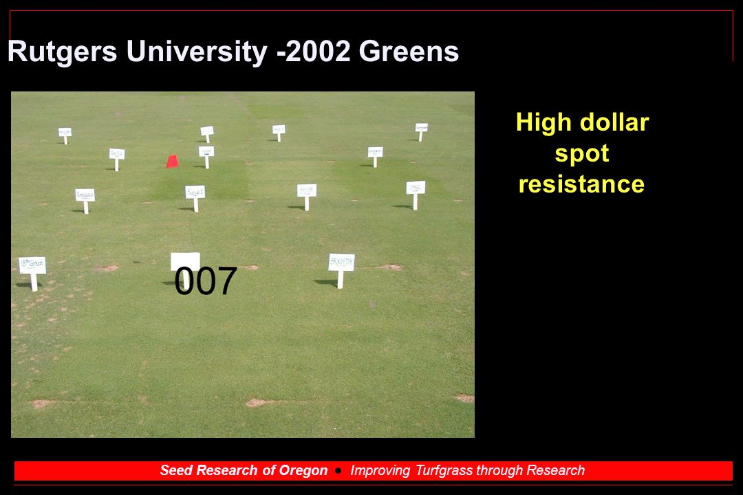 Seed Research of Oregon Improving Turfgrass through Research Rutgers University -2002 Greens High dollar spot resistance