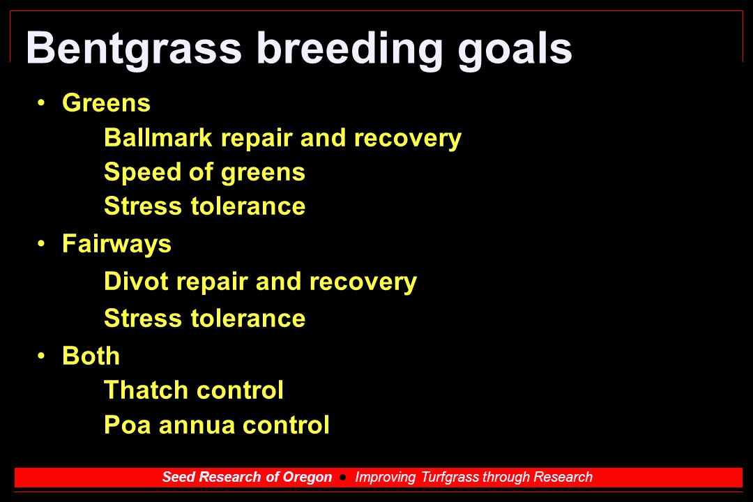 Seed Research of Oregon Improving Turfgrass through Research Velvet Bentgrass Thatch control important Ball marks Less than creeping bents, repair similar to high density creeping bents Fairway usage Thatch control, holds ball upright, wear tolerant, dollar spot resistant