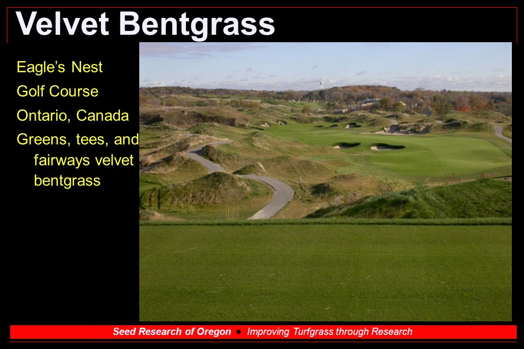 Seed Research of Oregon Improving Turfgrass through Research Velvet Bentgrass Eagle's Nest Golf Course Ontario, Canada Greens, tees, and fairways velv