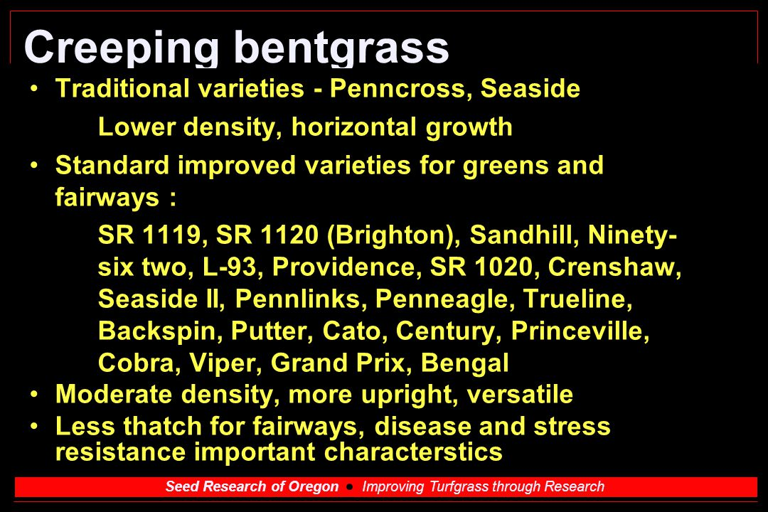 Seed Research of Oregon Improving Turfgrass through Research Creeping bentgrass High density varieties - greens Penn G-2, G-6, A-1, A-4, G-1 - all from selections at Augusta, GA - very similar genetics High thatch producers - must have budget and equipment to control Slower repair aerification holes, ball marks Use smaller diameter holes, topdress frequently Upright, dense growth - good at low height Good wear tolerance