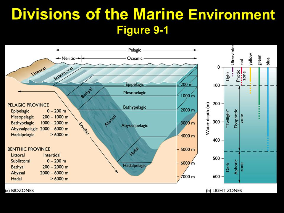 Divisions of the Marine Environment Figure 9-1