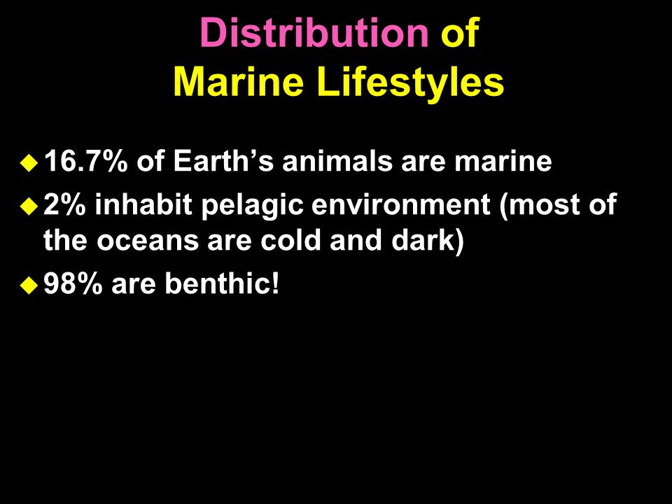 Distribution of Marine Lifestyles  16.7% of Earth's animals are marine  2% inhabit pelagic environment (most of the oceans are cold and dark)  98% are benthic!