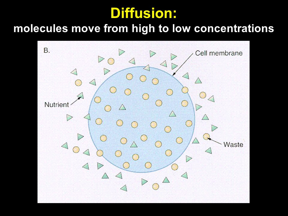 Diffusion: molecules move from high to low concentrations