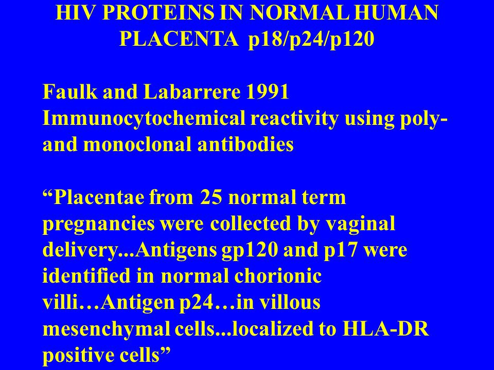 HIV PROTEINS IN NORMAL HUMAN PLACENTA p18/p24/p120 Faulk and Labarrere 1991 Immunocytochemical reactivity using poly- and monoclonal antibodies Placentae from 25 normal term pregnancies were collected by vaginal delivery...Antigens gp120 and p17 were identified in normal chorionic villi…Antigen p24…in villous mesenchymal cells...localized to HLA-DR positive cells