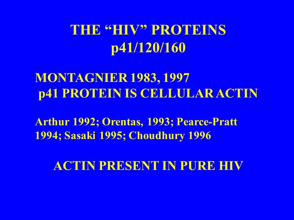 THE HIV PROTEINS p41/120/160 MONTAGNIER 1983, 1997 p41 PROTEIN IS CELLULAR ACTIN Arthur 1992; Orentas, 1993; Pearce-Pratt 1994; Sasaki 1995; Choudhury 1996 ACTIN PRESENT IN PURE HIV