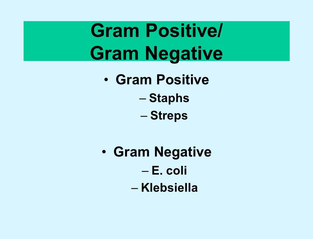 Gram Positive/ Gram Negative Gram Positive –Staphs –Streps Gram Negative –E. coli –Klebsiella