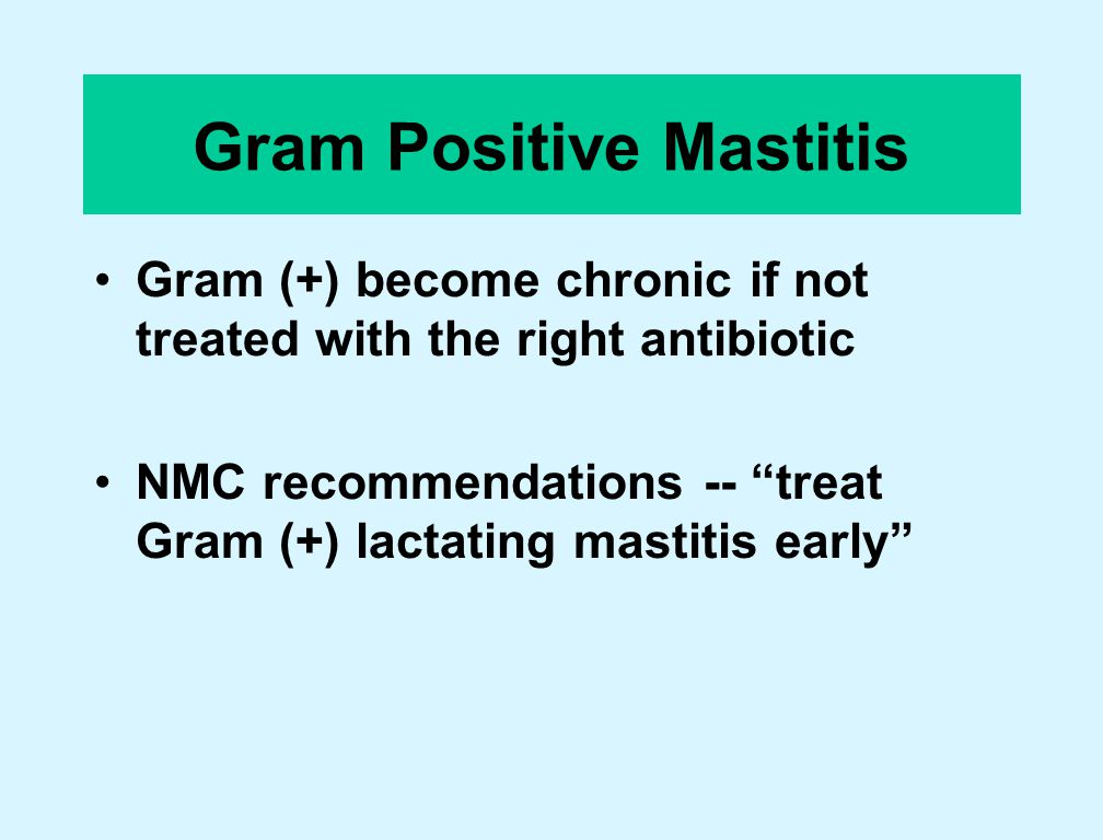 Gram Positive Mastitis Gram (+) become chronic if not treated with the right antibiotic NMC recommendations -- treat Gram (+) lactating mastitis early
