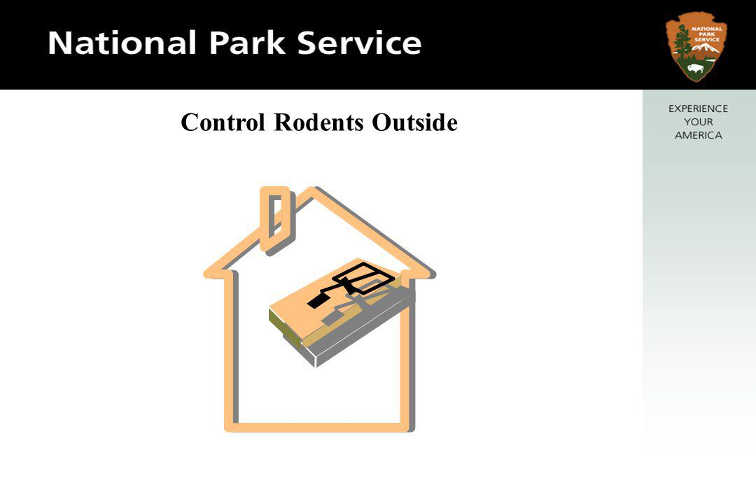 Control Rodents Outside