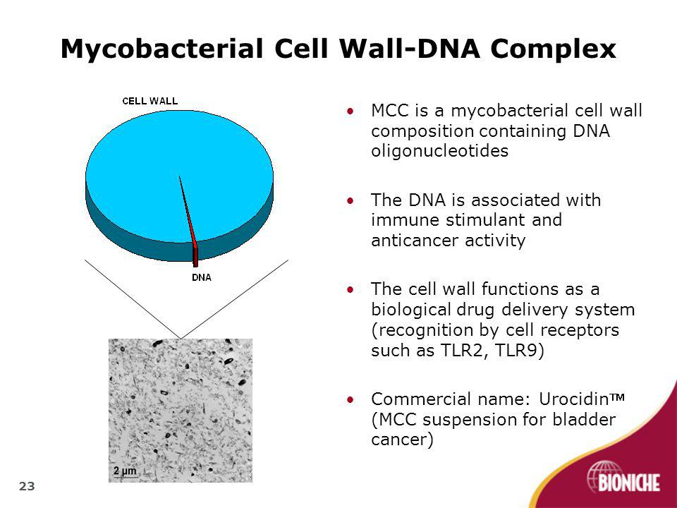 23 MCC is a mycobacterial cell wall composition containing DNA oligonucleotides The DNA is associated with immune stimulant and anticancer activity The cell wall functions as a biological drug delivery system (recognition by cell receptors such as TLR2, TLR9) Commercial name: Urocidin (MCC suspension for bladder cancer) Mycobacterial Cell Wall-DNA Complex