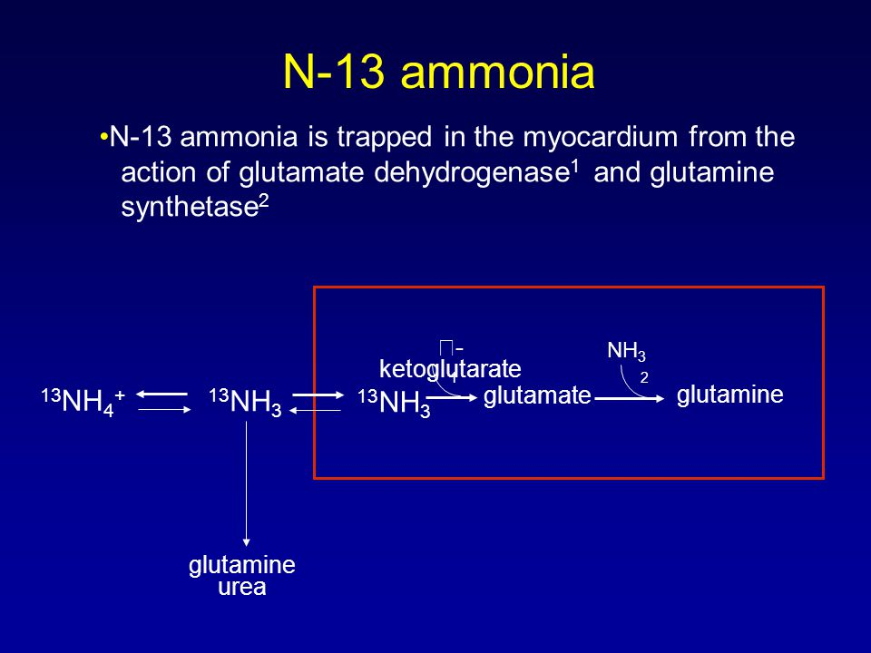 N-13 ammonia N-13 ammonia is trapped in the myocardium from the action of glutamate dehydrogenase 1 and glutamine synthetase 2 13 NH 3 13 NH 4 + glutamine urea  - ketoglutarate glutamate NH 3 glutamine 1 2 13 NH 3