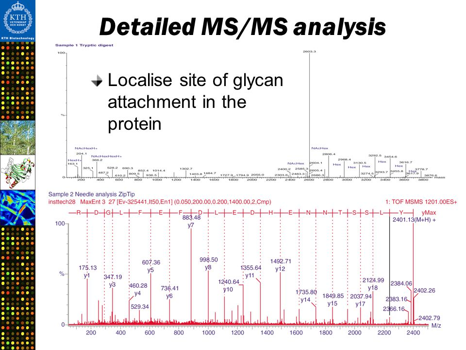 Detailed MS/MS analysis Localise site of glycan attachment in the protein