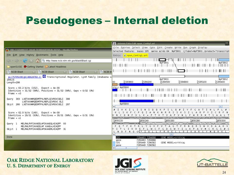 24 Pseudogenes – Internal deletion