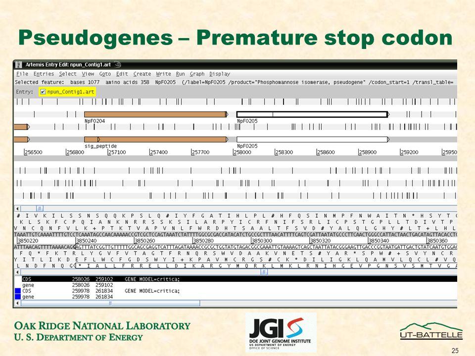 25 Pseudogenes – Premature stop codon