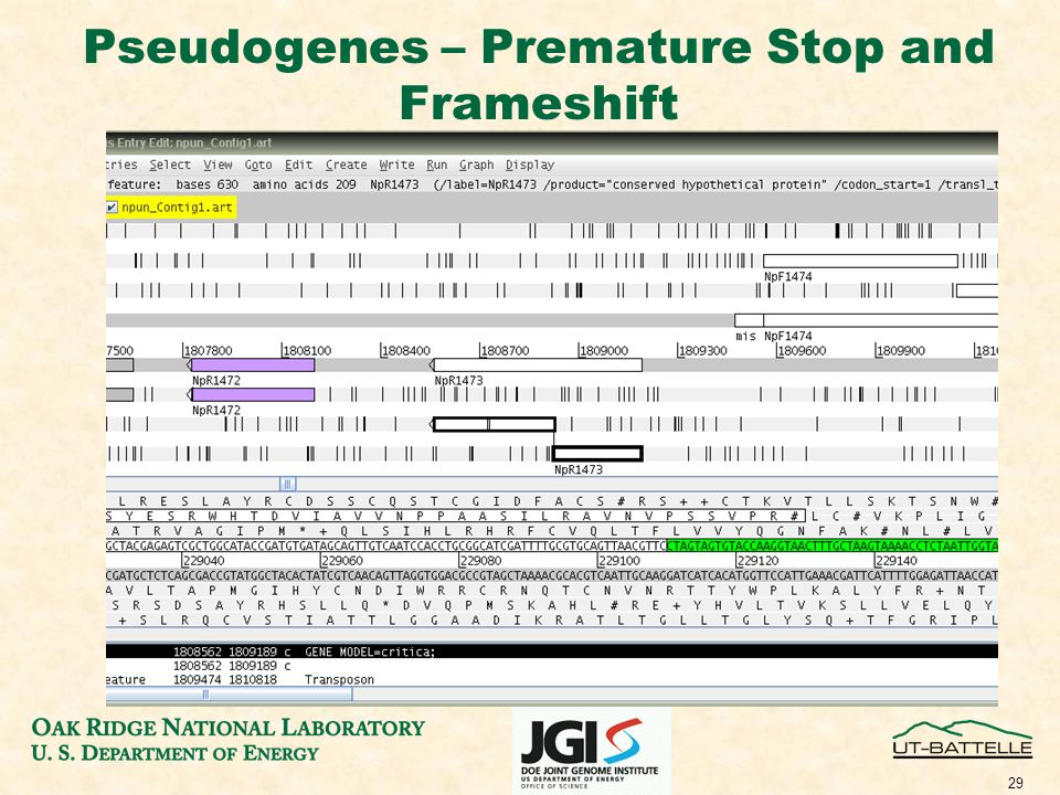 29 Pseudogenes – Premature Stop and Frameshift