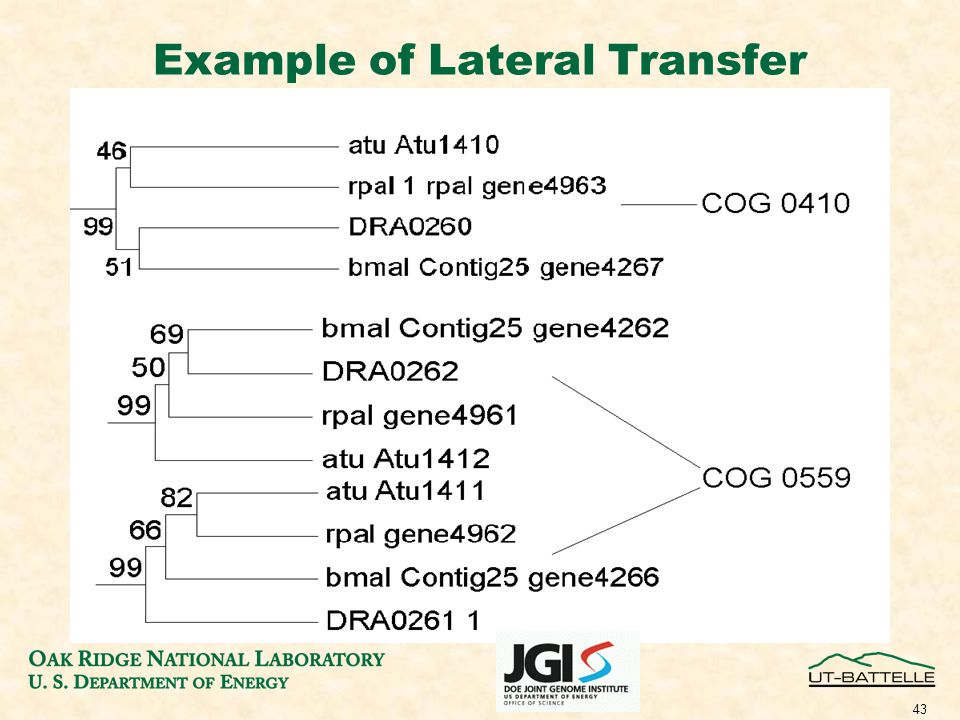 43 Example of Lateral Transfer