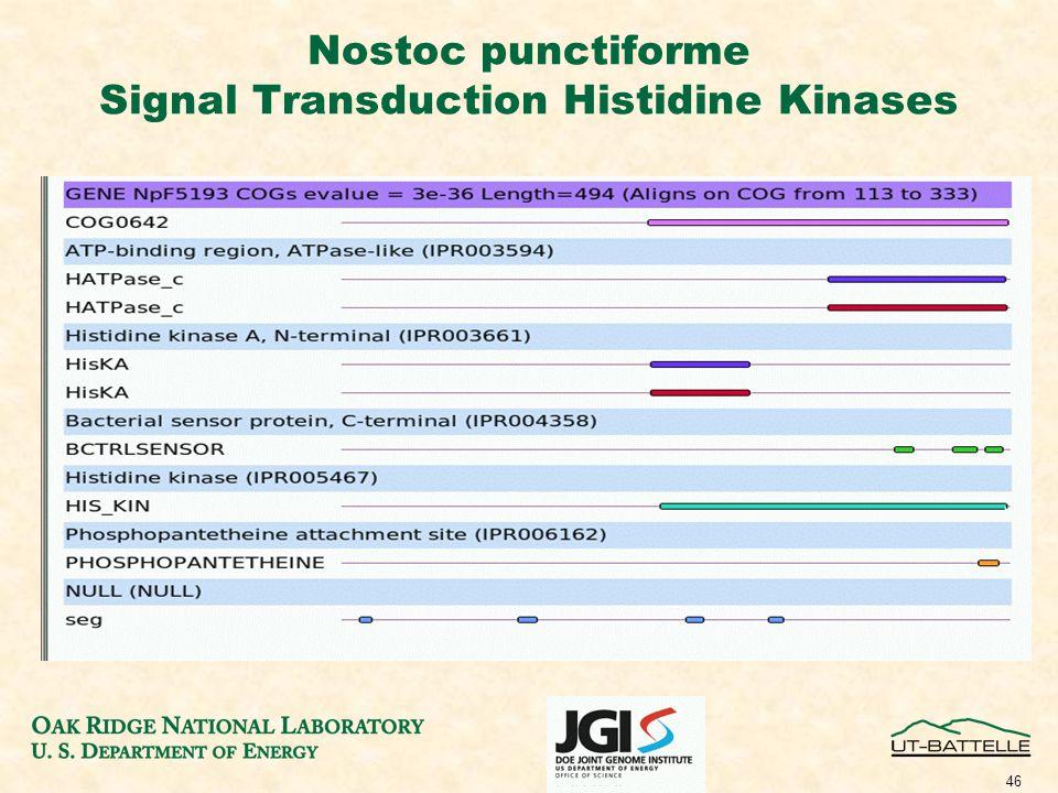 46 Nostoc punctiforme Signal Transduction Histidine Kinases