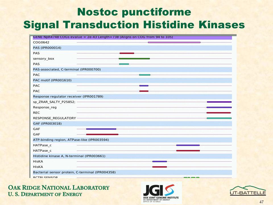 47 Nostoc punctiforme Signal Transduction Histidine Kinases