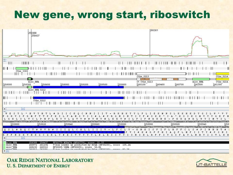 New gene, wrong start, riboswitch