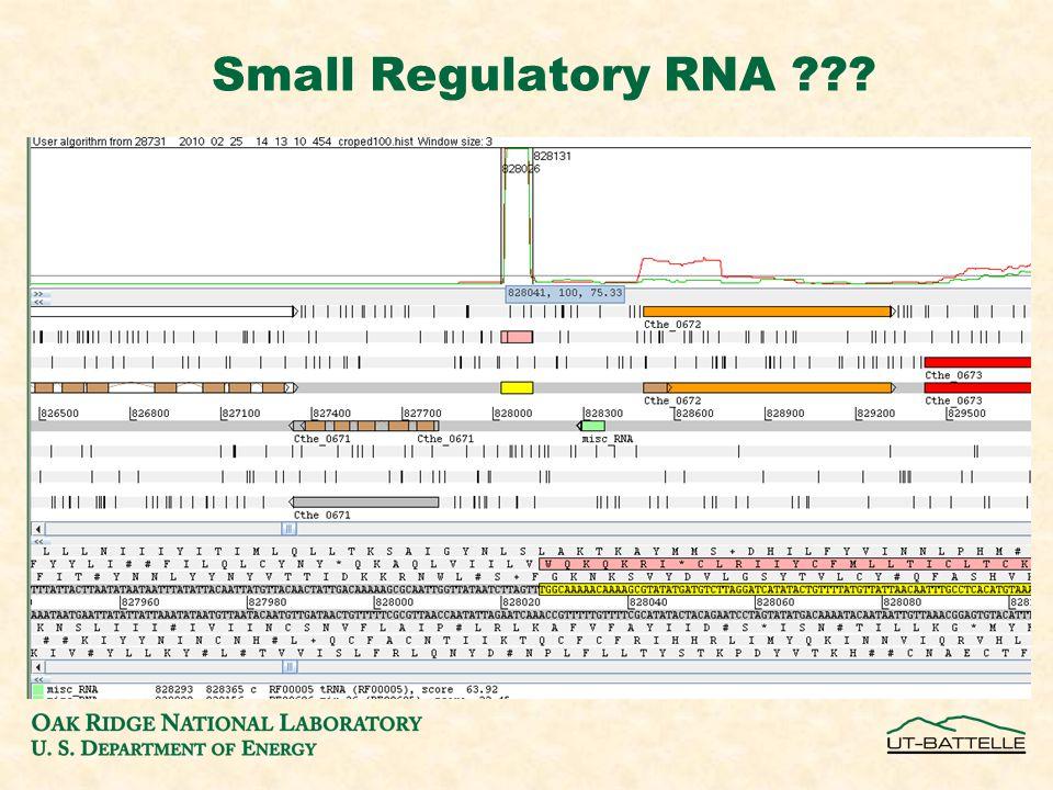Small Regulatory RNA