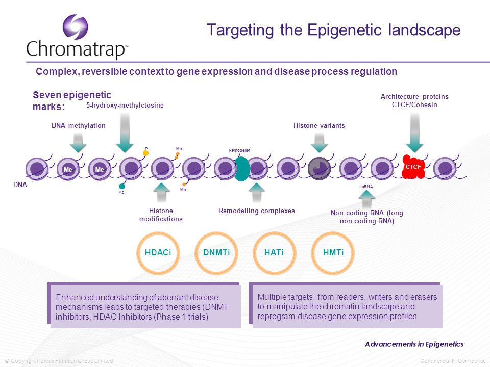 © Copyright Porvair Filtration Group Limited Commercial In Confidence Targeting the Epigenetic landscape Complex, reversible context to gene expression and disease process regulation DNA methylation 5-hydroxy-methylctosine Histone variants Architecture proteins CTCF/Cohesin Non coding RNA (long non coding RNA) Remodelling complexesHistone modifications CTCF DNA Seven epigenetic marks: ncRNA Remodeller Me P Ac Me HDACiDNMTiHATiHMTi Enhanced understanding of aberrant disease mechanisms leads to targeted therapies (DNMT inhibitors, HDAC Inhibitors (Phase 1 trials) Multiple targets, from readers, writers and erasers to manipulate the chromatin landscape and reprogram disease gene expression profiles