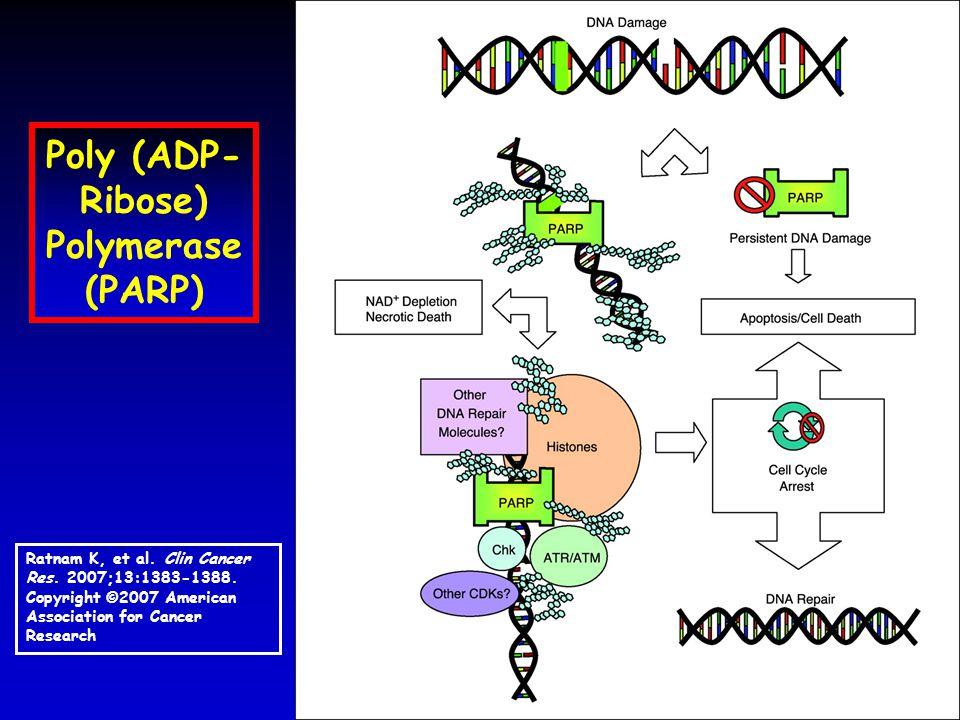 Poly (ADP- Ribose) Polymerase (PARP) Ratnam K, et al.