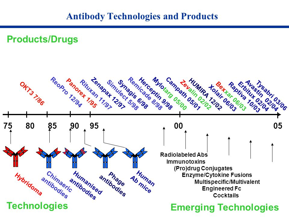 Antibody Technologies and Products 75 80 85 90 95 00 05 Products/Drugs Hybridoma Humanised antibodies Technologies OKT3 7/86 Panorex 1/95 Chimaeric an