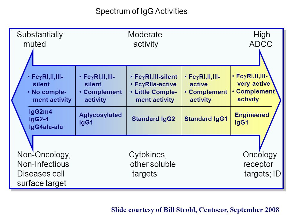 Substantially Moderate High muted activity ADCC Fc  RI,II,III- silent No comple- ment activity Fc  RI,II,III- silent Complement activity Fc  RI,III-silent Fc  RIIa-active Little Comple- ment activity Fc  RI,II,III- active Complement activity Fc  RI,II,III- very active Complement activity IgG2m4 IgG2-4 IgG4ala-ala Aglycosylated IgG1 Standard IgG2Standard IgG1 Engineered IgG1 Non-Oncology, Cytokines, Oncology Non-Infectious other soluble receptor Diseases cell targets targets; ID surface target Spectrum of IgG Activities Slide courtesy of Bill Strohl, Centocor, September 2008
