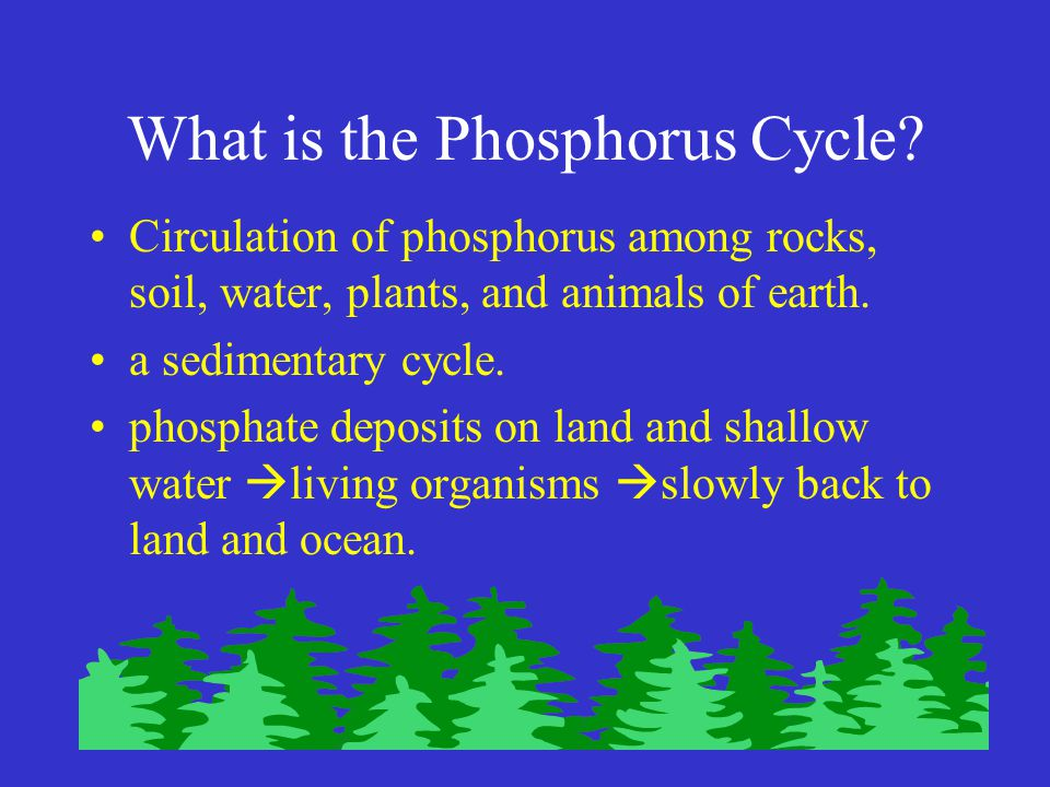 What is the Phosphorus Cycle.