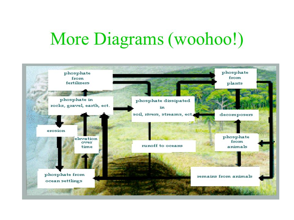 Phosphorus Cycle Diagrams