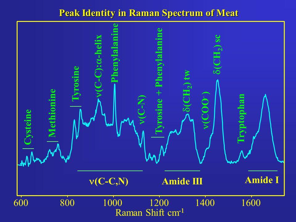 Peak Identity in Raman Spectrum of Meat 6001400120010008001600 Raman Shift cm -1 Phenylalanine Tyrosine Cysteine Methionine (C-C,N) Amide III Amide I (C-C):  -helix (C-N)  (CH 2 ) sc  (CH 2 ) tw (COO - ) Tryptophan Tyrosine + Phenylalanine