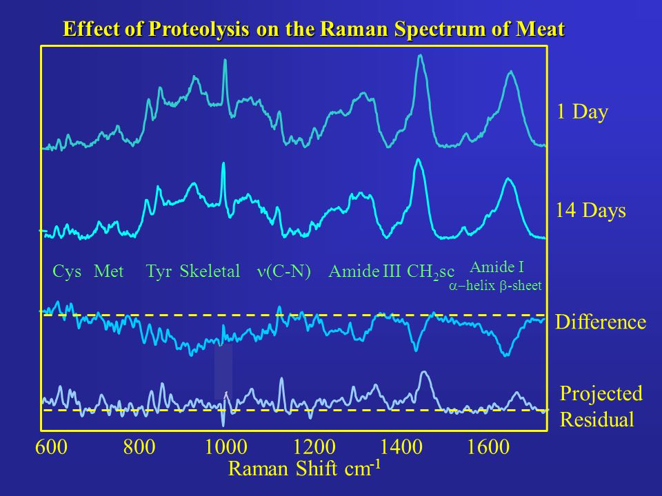 6001400120010008001600 Raman Shift cm -1 1 Day Effect of Proteolysis on the Raman Spectrum of Meat Projected Residual 14 Days Difference TyrSkeletalMe