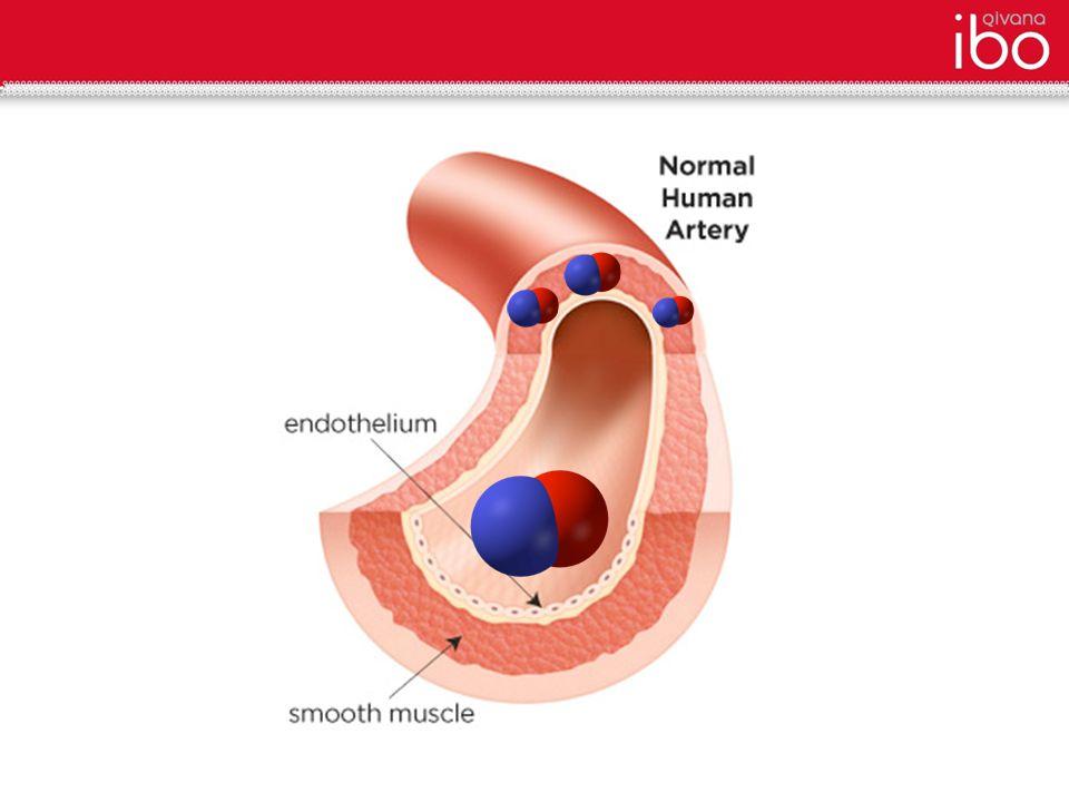 Narrowed Artery (Lacks N-O) Dilated Artery (Increased N-O)
