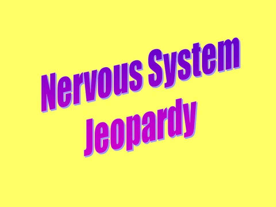 Answer: sensory nerves; efferent nerves Back to the Game Board xxx for 5