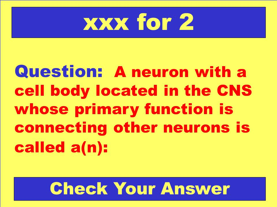 Question: A neuron with a cell body located in the CNS whose primary function is connecting other neurons is called a(n): xxx for 2 Check Your Answer