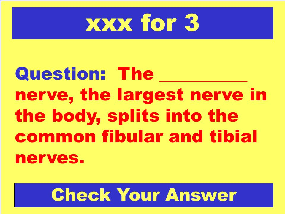 Question: The __________ nerve, the largest nerve in the body, splits into the common fibular and tibial nerves. xxx for 3 Check Your Answer