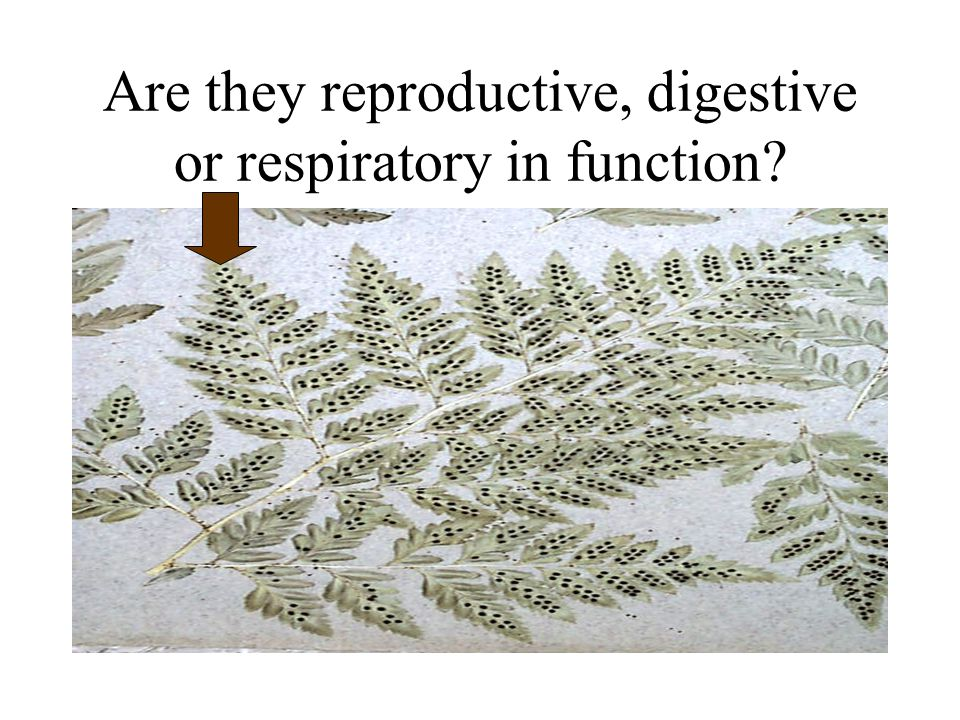 Are they reproductive, digestive or respiratory in function