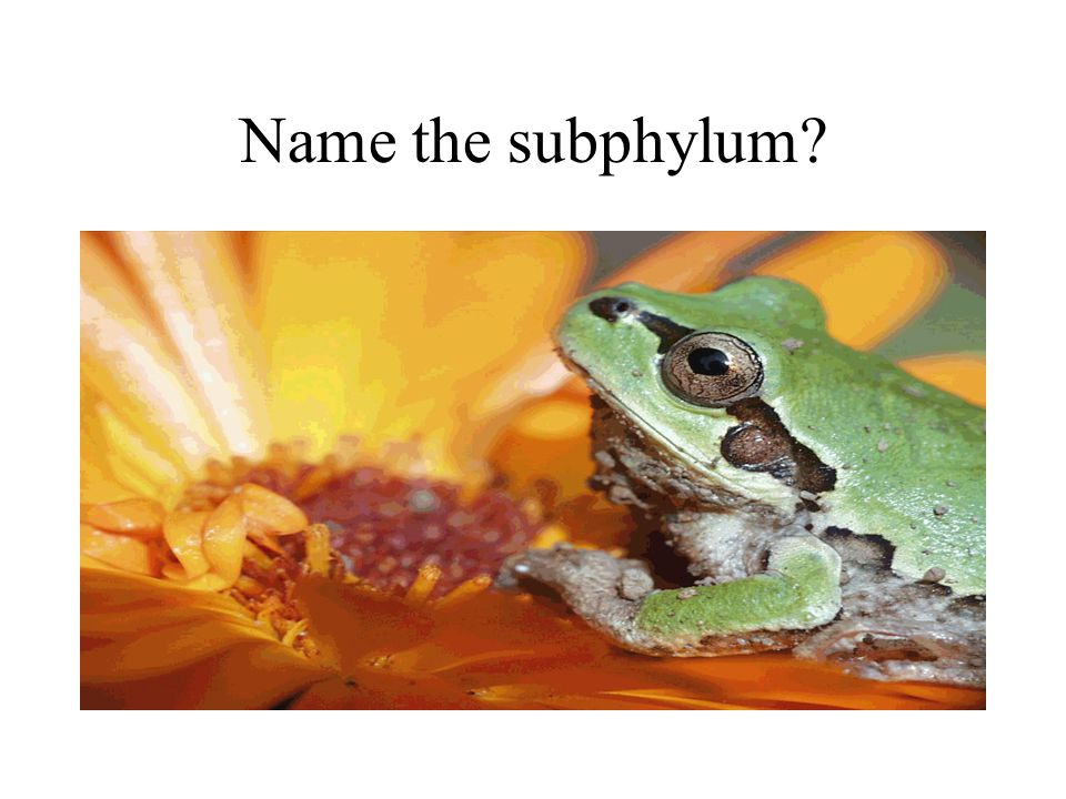 Name the subphylum