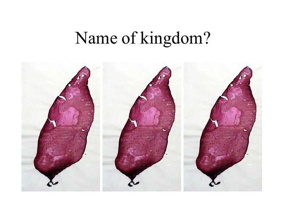 Name of kingdom H