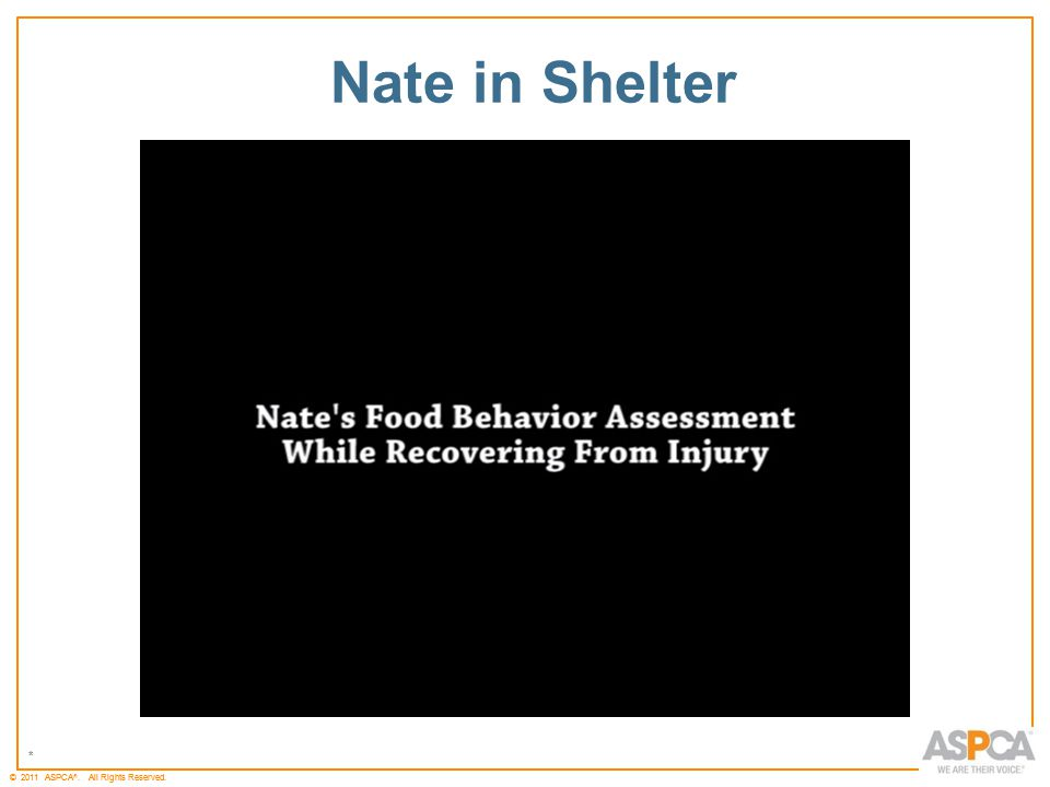 * © 2011 ASPCA ®. All Rights Reserved. * Nate in Shelter