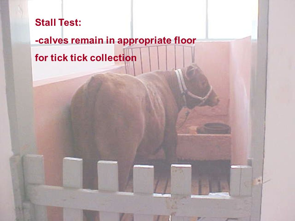 Stall Test: -calves remain in appropriate floor for tick tick collection