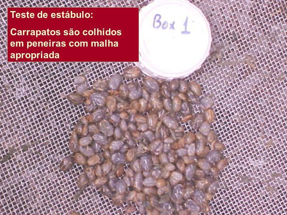 Teste de estábulo: Carrapatos são colhidos em peneiras com malha apropriada