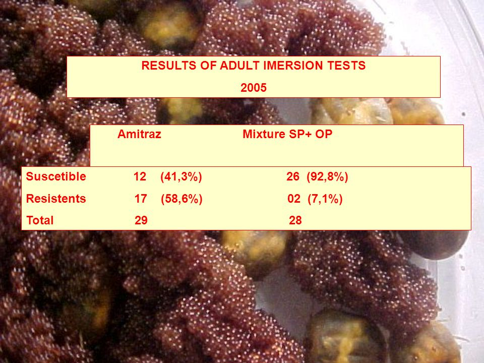 RESULTS OF ADULT IMERSION TESTS 2005 Amitraz Mixture SP+ OP Suscetible 12 (41,3%) 26 (92,8%) Resistents 17 (58,6%) 02 (7,1%) Total 29 28