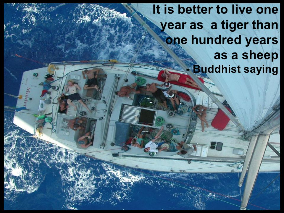 © It is better to live one year as a tiger than one hundred years as a sheep - Buddhist saying