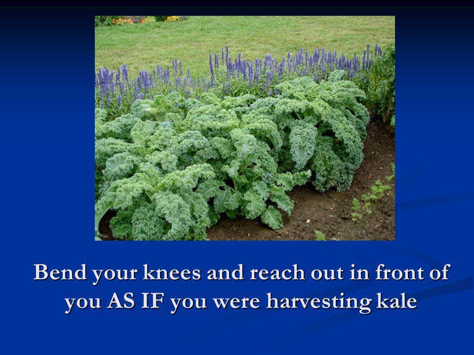 Bend your knees and reach out in front of you AS IF you were harvesting kale