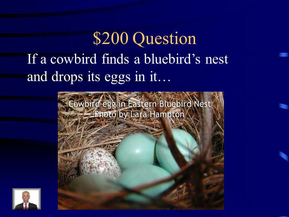 $100 Answer Then the caterpillars that hatch won't have food to eat and the larvae could die.