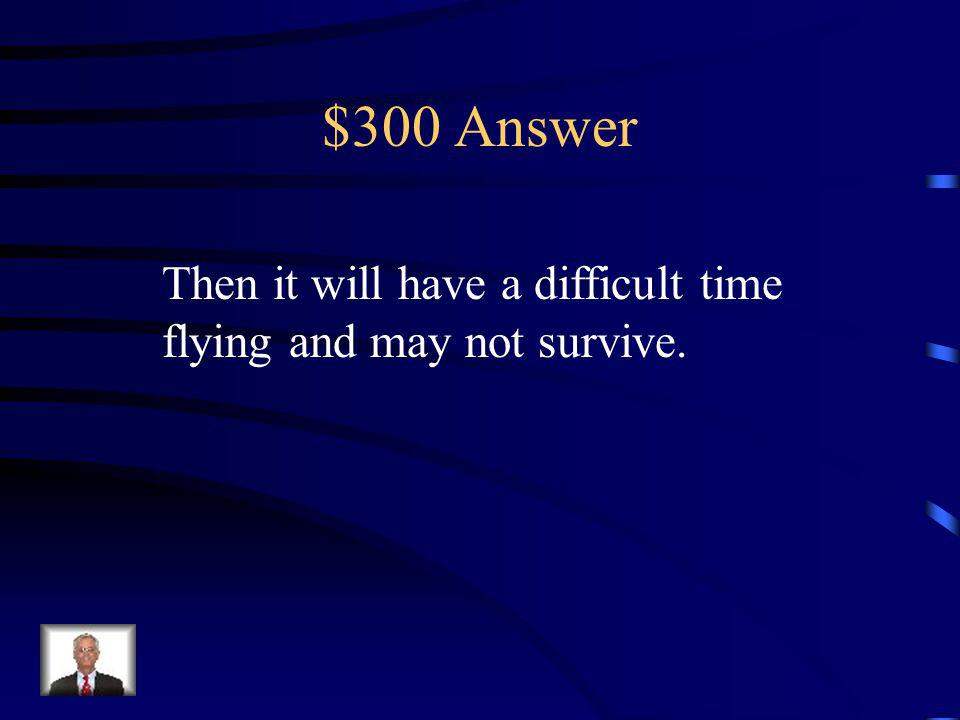 $300 Question If a moth has a ripped wing…