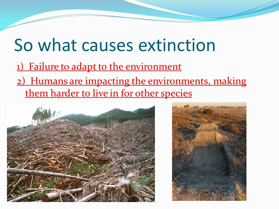 So what causes extinction 1) Failure to adapt to the environment 2) Humans are impacting the environments, making them harder to live in for other spe