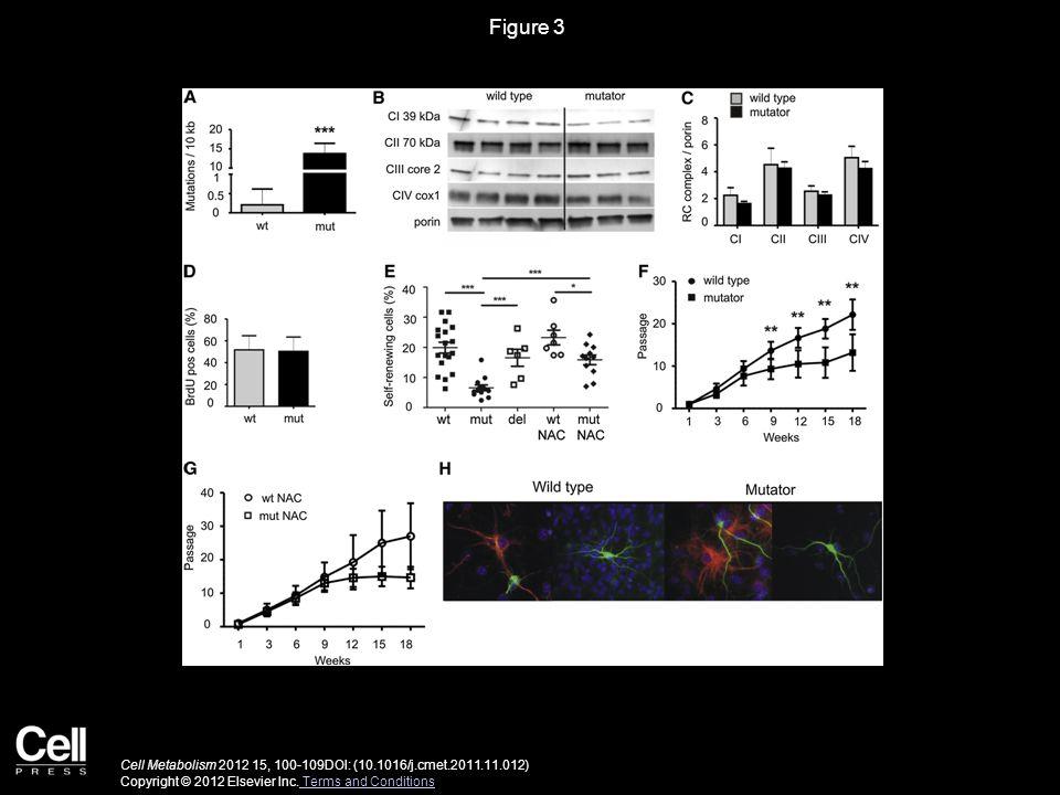 Figure 3 Cell Metabolism 2012 15, 100-109DOI: (10.1016/j.cmet.2011.11.012) Copyright © 2012 Elsevier Inc.